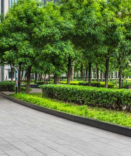 ProScape Landscaping Commercial Grounds Maintenance