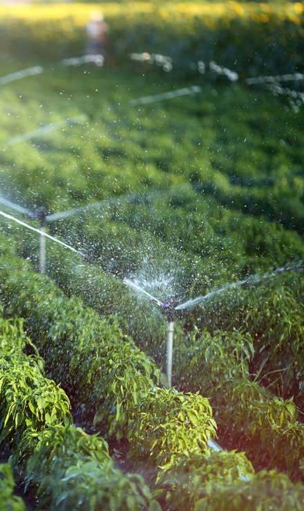 ProScape Irrigation System Repair