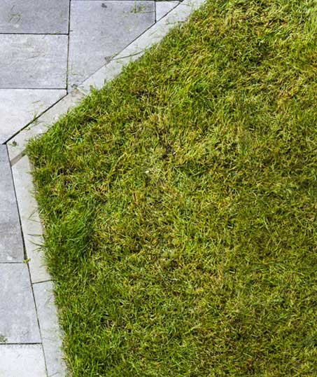 ProScape Lawn Dethatching