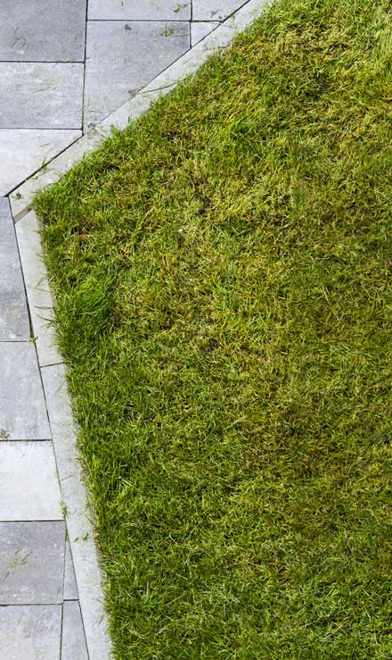 ProScape Landscaping Lawn Dethatching