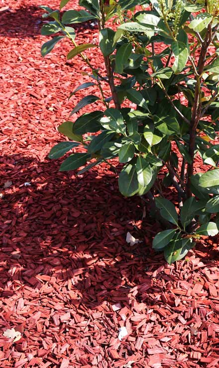 ProScape Landscaping Mulching