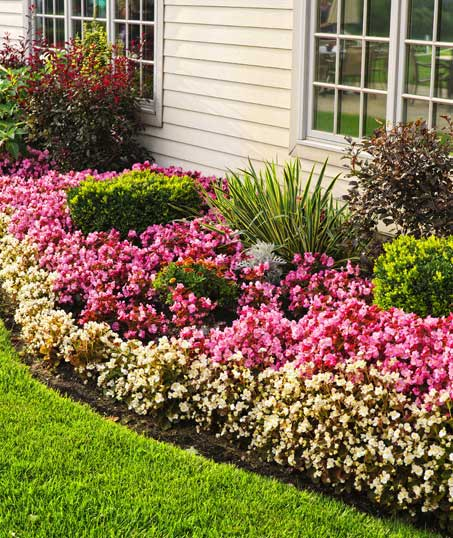 ProScape Garden Design