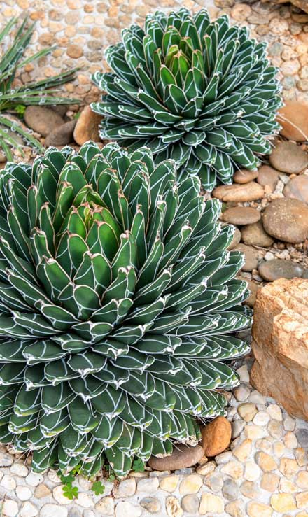 ProScape Landscaping Xeriscaping